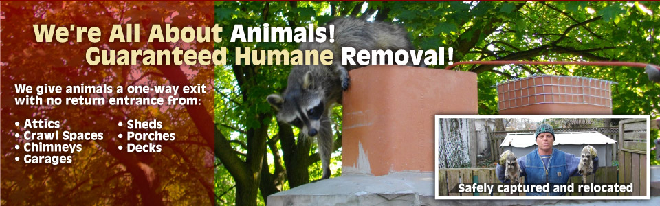 We're all about animals! Guaranteed humane removal!