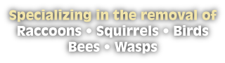 Specializing in the removal of Raccoons • Squirrels • Birds Bees • Wasps